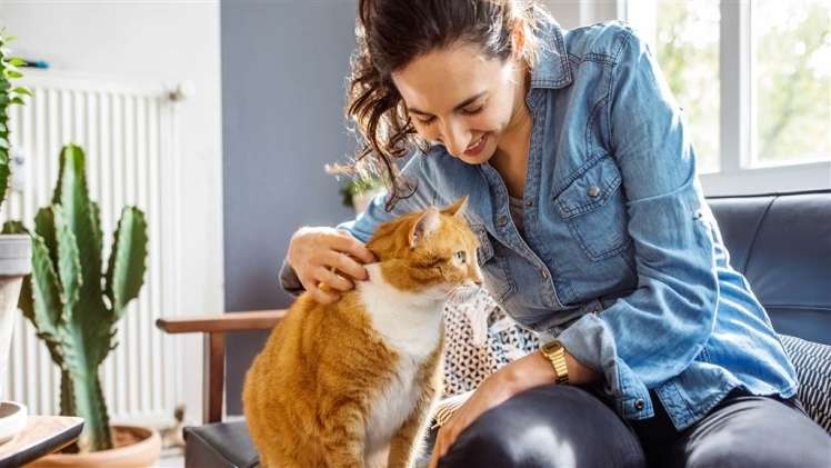 3 Perfect Gifts for Cat Owners