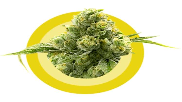 Reasons to buy Cannabis online in the UK