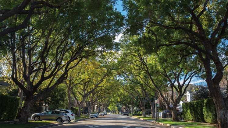 Most Important Tree Services For Your Home