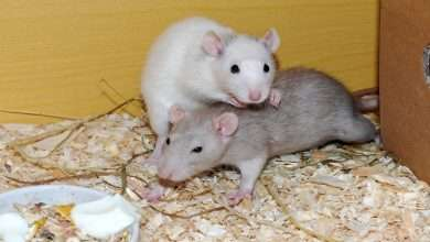 Rodent and Insect Infestations Most Damaging to a Home