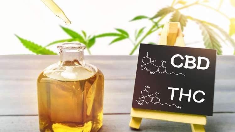 THC vs