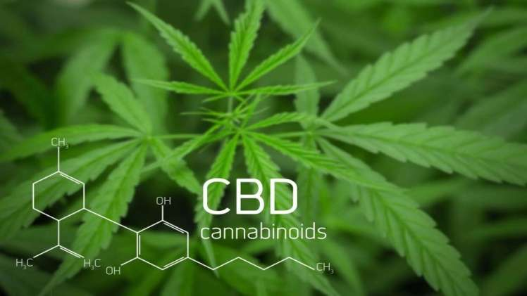 Some Mind Blowing Benefits of CBD for Achieving Healthy Tresses