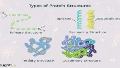 4 Levels of Protein Structure Explained