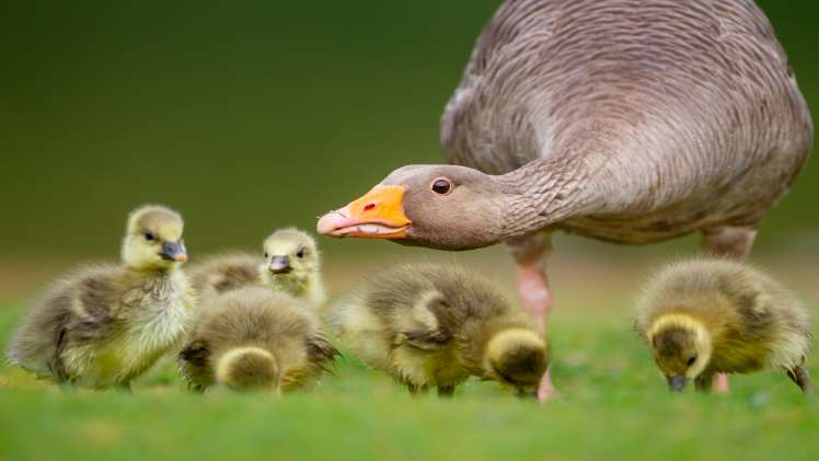 5 Best Tips To Improve Your Wildlife Photography