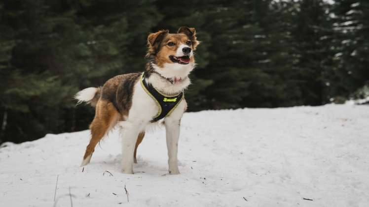 Dog Harness – How To Choose The Right One