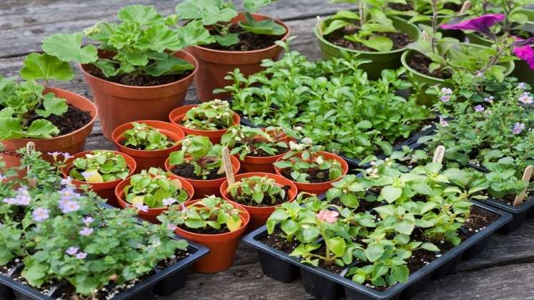 Here is what to look for when choosing the best online plant nursery 1