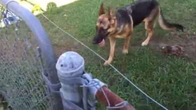 Know How to Install the Above Ground Electric Dog Fence