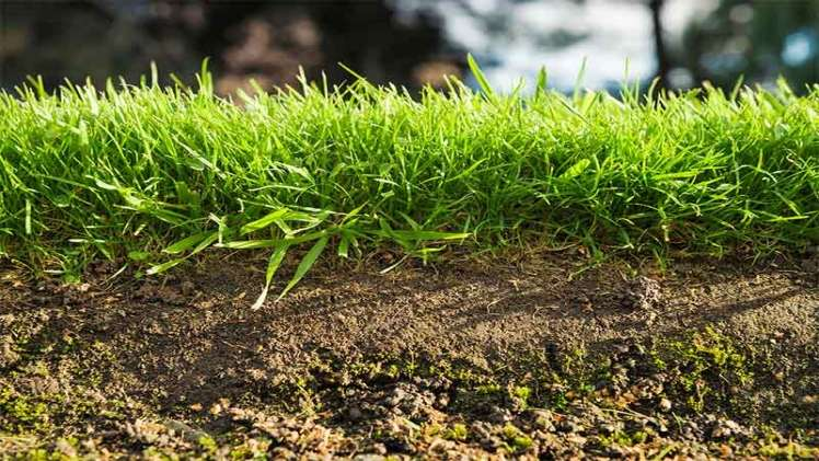 Tips on How to Keep Your Lawn Weed Free