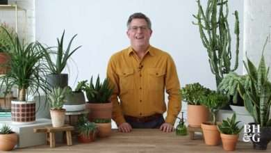 Reasons why succulent is the most popular houseplant