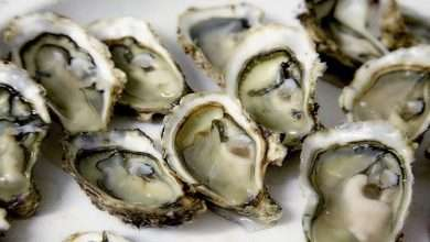 The Ultimate Wine and Oyster Food Pairing Guide